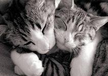 котыi