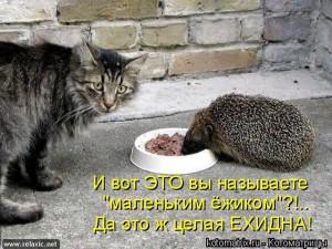 kotomatrix_0331